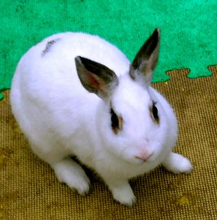13.B棟ウサギs.jpg