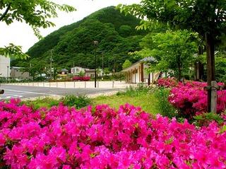1 湯の街公園つつじ.JPG