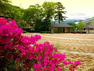 2 湯の街公園つつじ.JPG