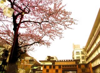 51.ホテル前桜 小.jpg