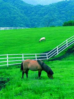 7.こやぎの丘 小馬と羊.JPG