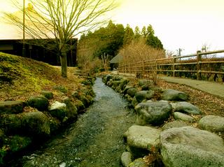 7.杉並木公園 風景s.jpg