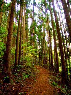 40小綱の林道s.jpg